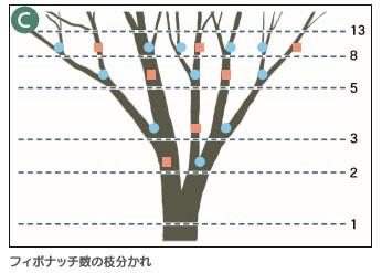 背景事典の木