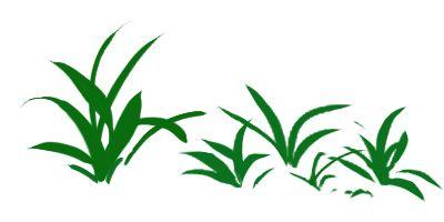 イネ科の葉は平行脈の長細い葉で描いた草