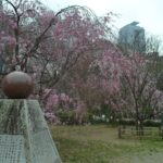 枝垂桜_02